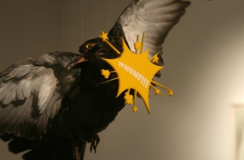 birds5